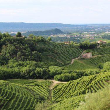 Treviso and Prosecco Hills